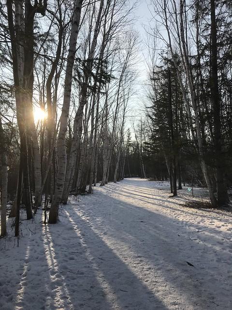 winter walks in the woods
