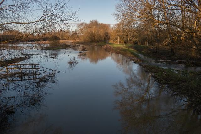 River Chelmer, December 2019
