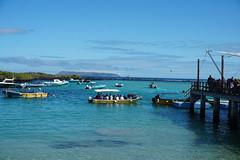 Puerto Villamil, Isla Isabela (Albemarle), the Galápagos Islands, Ecuador.