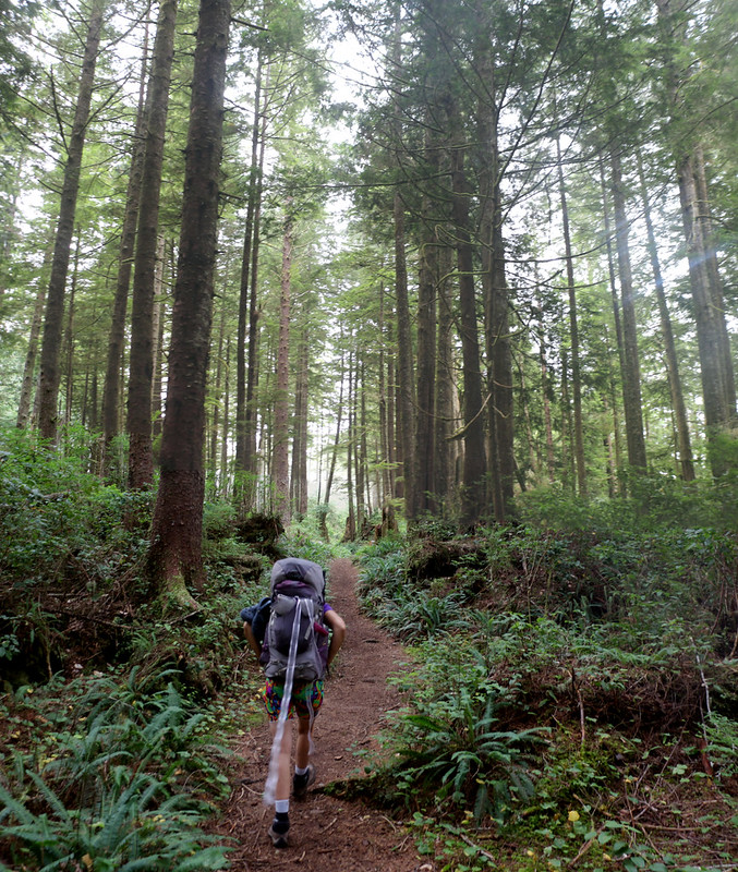 Tall trees and a soft trail through the misty forest on the West Coast Trail