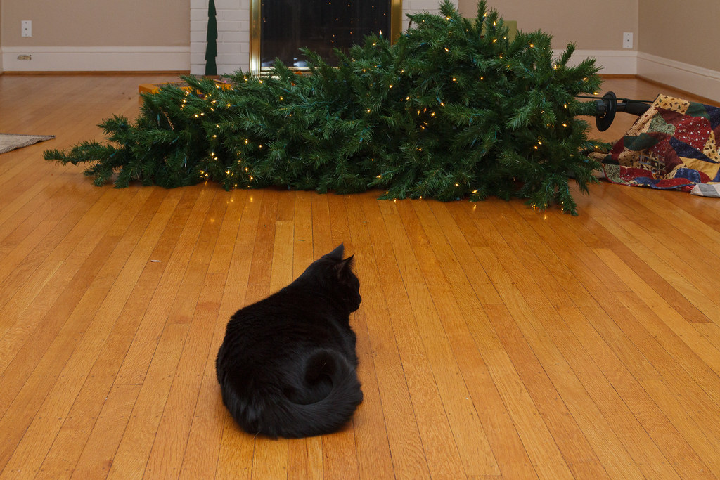 Our cat Emma sits on the hardwood floor in front of the Christmas tree she knocked over while sleeping in it, taken in December 2009