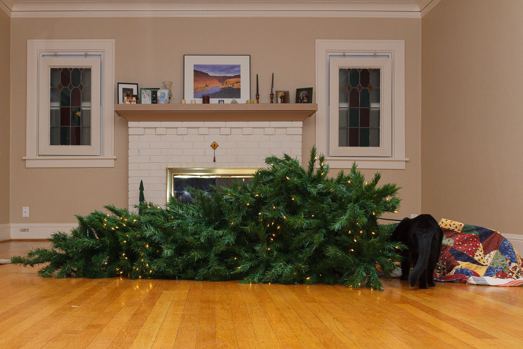Our cat Emma inspects the Christmas tree she knocked over in December 2009