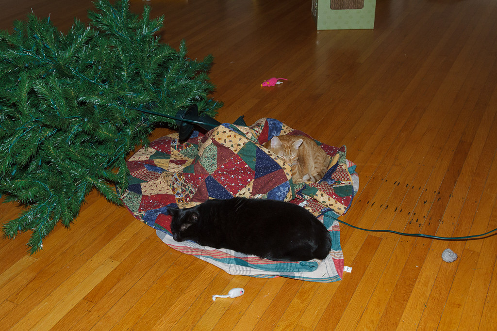 Our cats Emma and Sam sleep at the base of the Christmas tree that Emma knocked over in December 2009