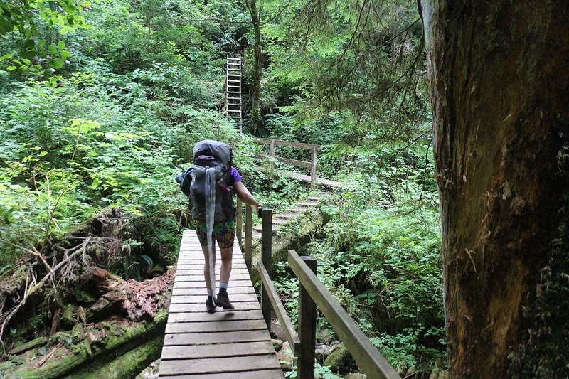 Wooden walkways, steps carved on big fallen trees, and ladders make the West Coast Trail interesting