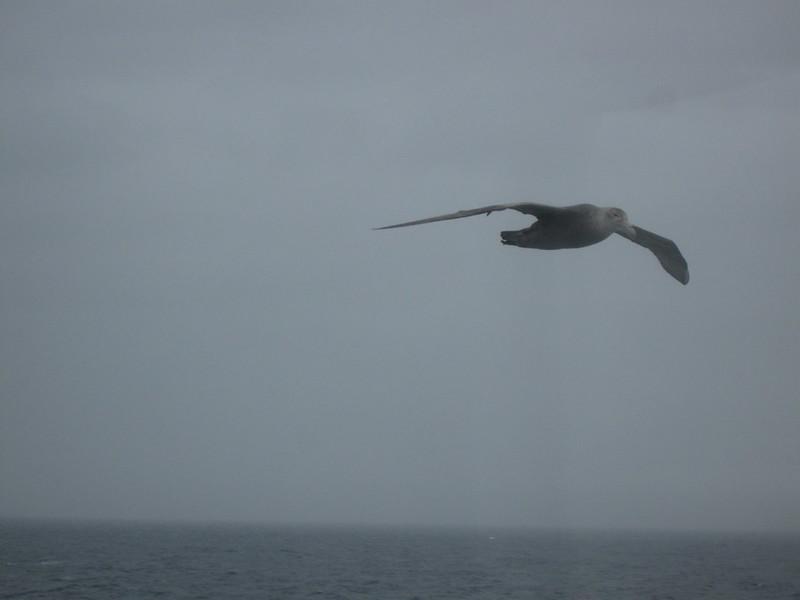 Flyby - Drake Passage Return Day 2