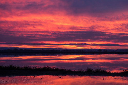 california norcal yubacounty sunrise dawn rice fields flooded water reflection sky clouds color commute