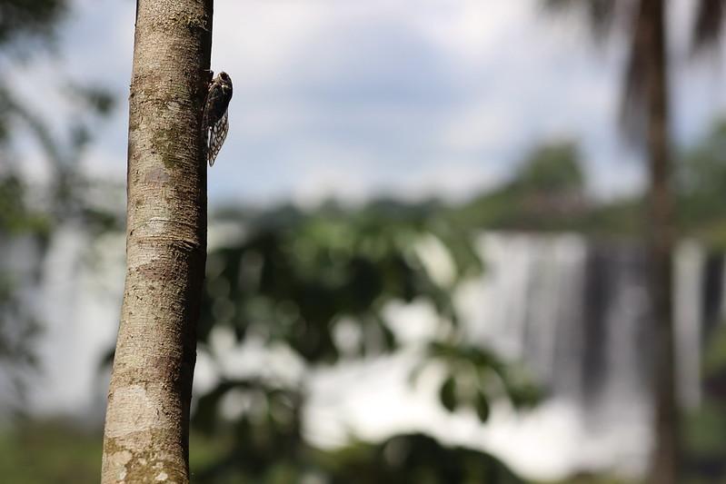 Argentinian Iguazú Falls