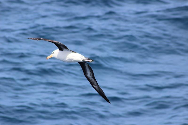 Drake Passage Day 2
