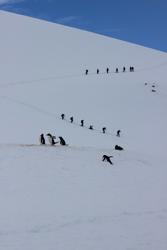 Penguins and People walking their respective highways, Cuverville Island