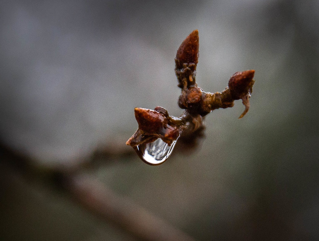 Water drop in the forest