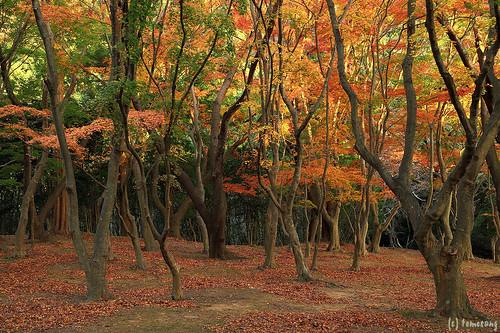 Autumn Color at Kouzanen Garden 2019