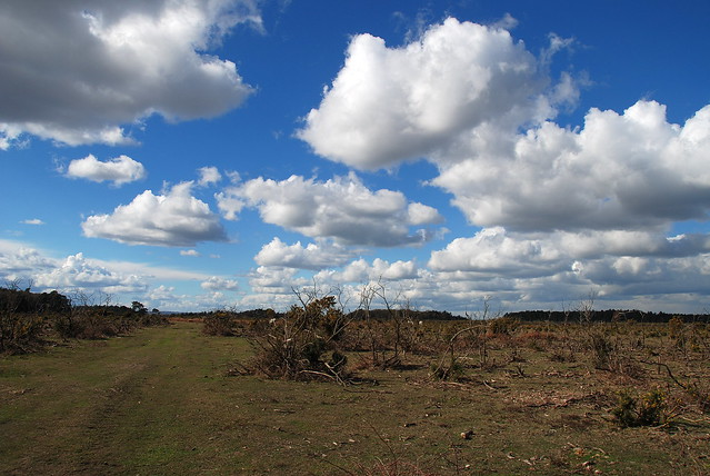 The New Forest - Where Nothing Clouds a Beautiful View!
