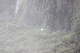 Brazilian Iguaçu Falls