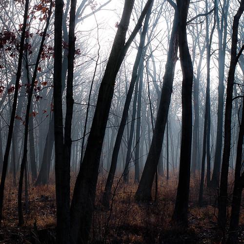 captaindanielwrightwoods d5000 nikon branches dreamlike dreamy fog foggy forest landscape mist misty natural noahbw quiet silhouette square still stillness trees winter woods