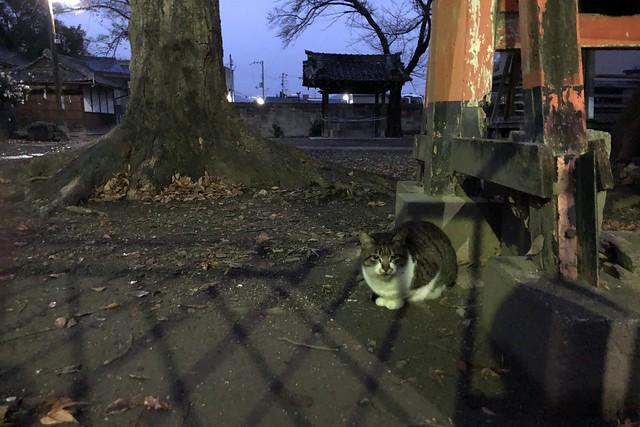 Today's Cat@2019-12-26