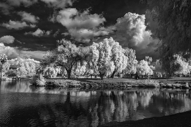 Trees, Clouds, And Reflections At Lindo Lake