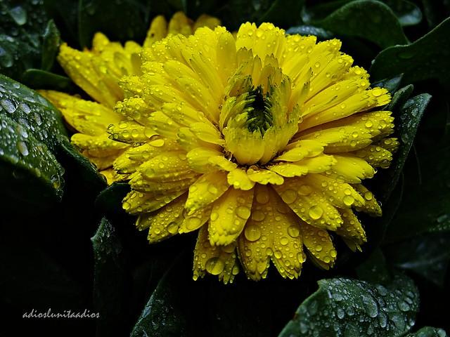 Flores. 017