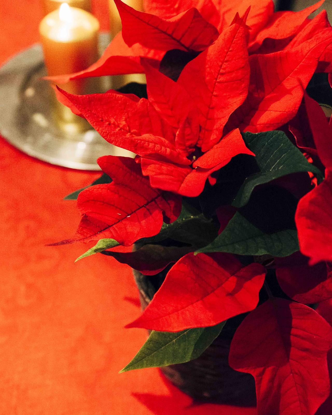 pinossa_joulu2019IMG_3445