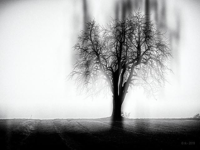 Between Shadows and Dreams...