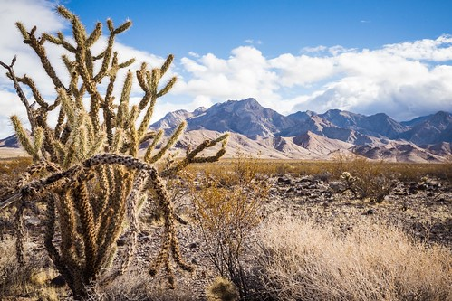Pahrump Valley Wilderness