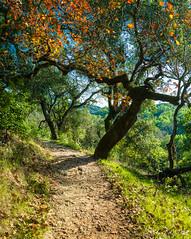 Todd Creek Trail-Taylor Mountain Regional Park