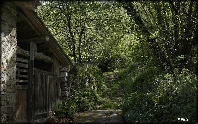 Adentrándonos en el bosque asturiano.