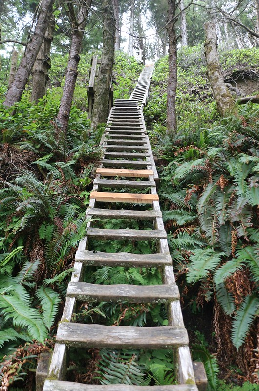 After the bridge over Tsocowis Creek there were even more ladders to climb