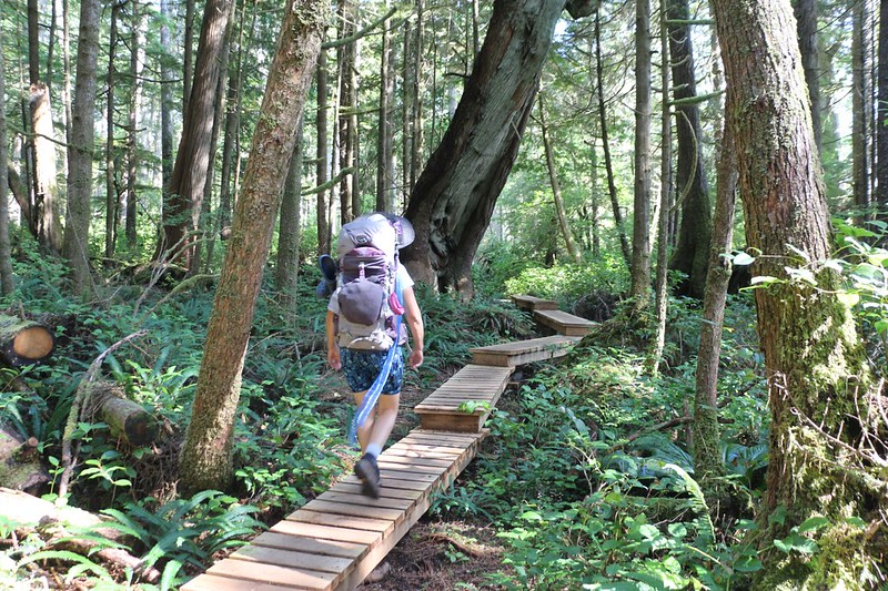 Easy hiking on nice new wooden walkways on the West Coast Trail south of the Klanawa River