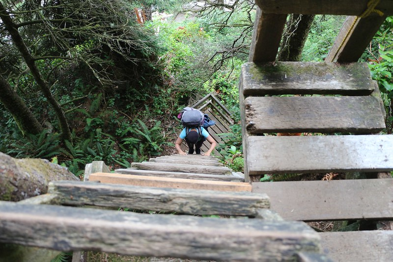 Climbing up the series of tall ladders near Tsocowis Creek on the West Coast Trail
