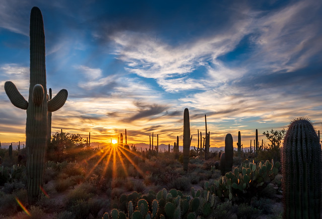 Sunset at Saguaro National Park