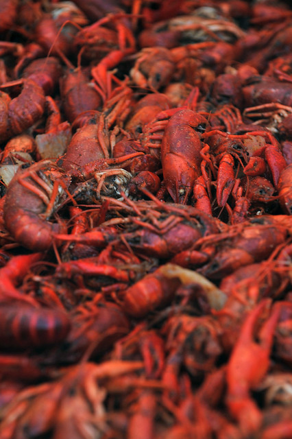Louisiana boiled crawfish