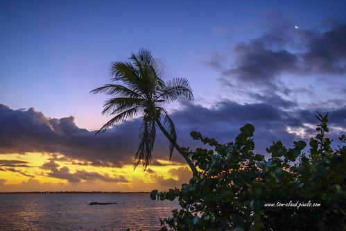 sunsunrise sunrise morning dawn tree palm palmtree seagrapes landscape seascape clouds cloudy sky weather moon sliver crescent bluesky park indianriversidepark jensenbeach florida nature mothernature outdoors tropic tropics tropical