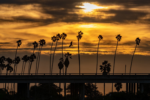 goleta tree trees palmtree palmtrees goletabeach sunrise twilight morning dawn