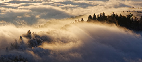fog trees forest morning sunrise sunlight sun clouds uetliberg hill mountains