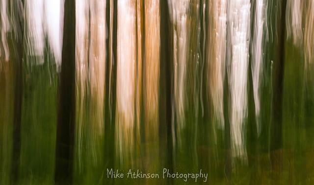 Tree Lines.