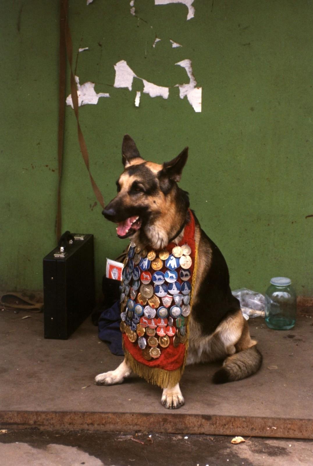 1989. Собака с медалями в зоомагазине в Москве