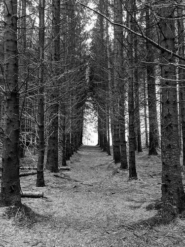 Mirador Huillifotem trail