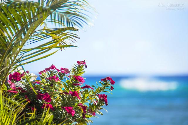 Hawaiian Ocean View - Waikiki Beach, Honolulu, Hawaii