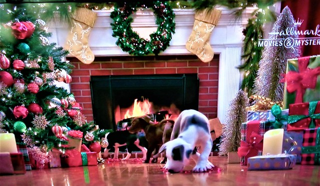 THE 12 PUPS OF CHRISTMAS