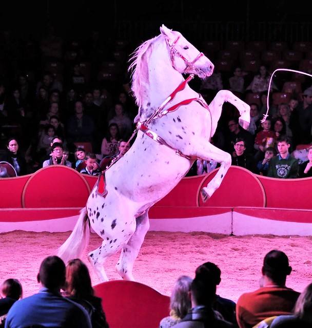 Christmas Circus in Heidelberg, Germany 2019 - White Horse with Trainer Robin Lauenburger