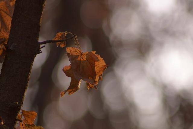 Осеннее боке / Autumn bokeh