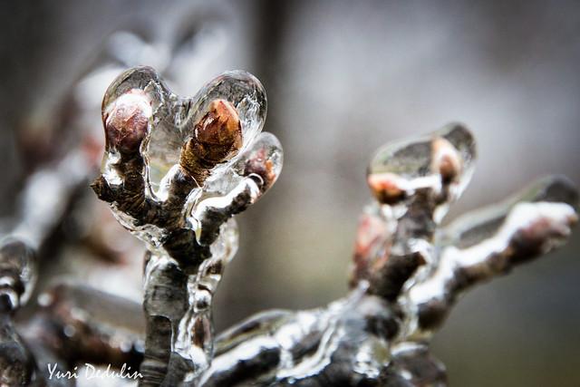 Frozen Alien