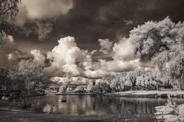 View From The South End Of Lindo Lake - IR