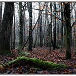 Forest walk in Skryllegården