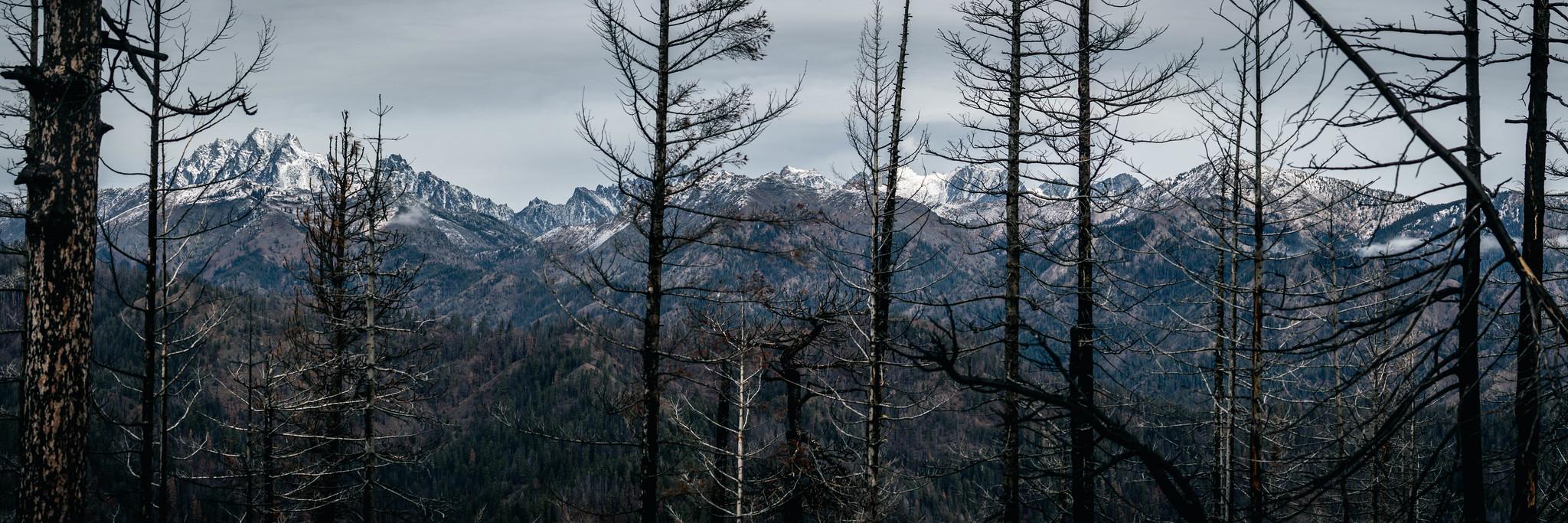 Stuart Range panoramic view through trees