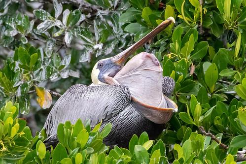 fl florida birds wildlife nature dennis adair 7dm2 canon