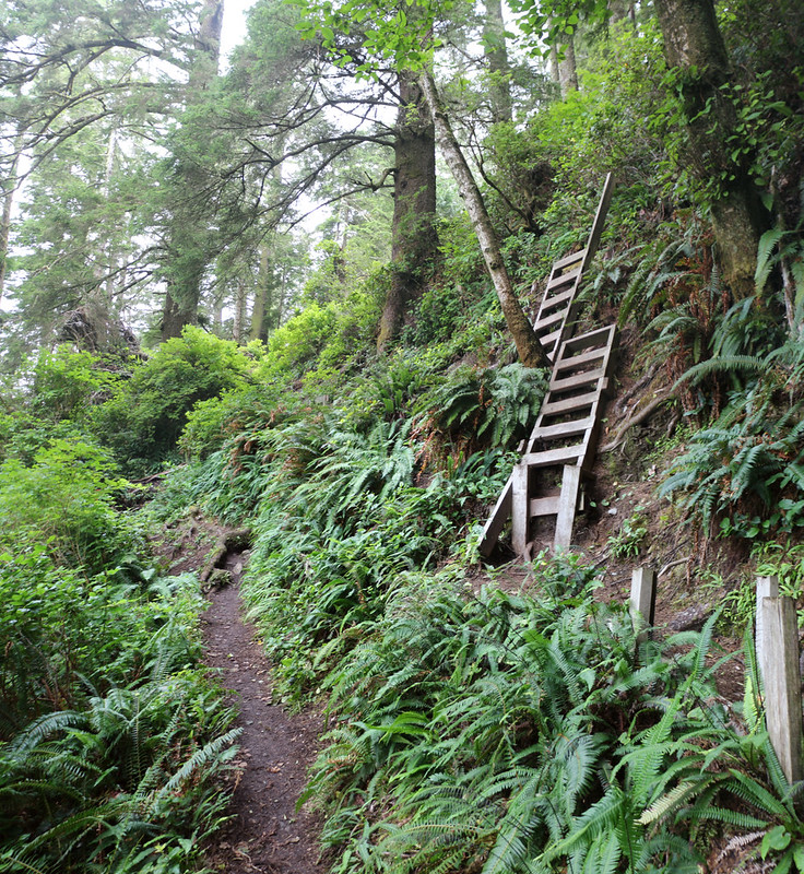 Descending a steep hillside on wooden ladders north of Nitinat Narrows