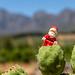 Santa atop a Cactus