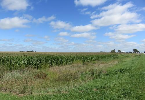 iowa ia landscapes corn webstercounty badger northamerica unitedstates us