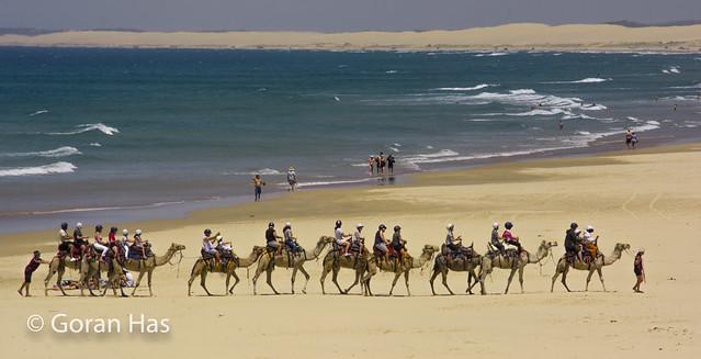 Anna Bay - camels panorama
